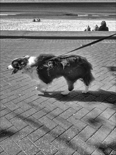 2dog_bw2WEB
