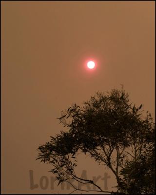 5red-sun-40WEB
