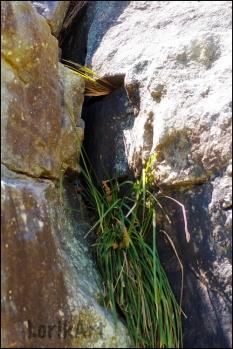 6rock-crevice1web