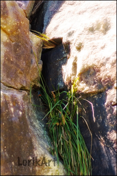 7rock-crevice2web