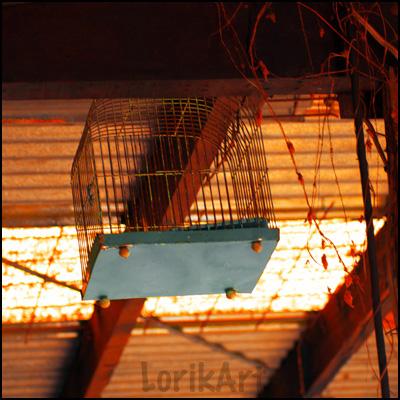 10birdcage_shed4web