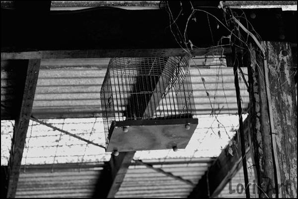 8birdcage_shed2Wweb