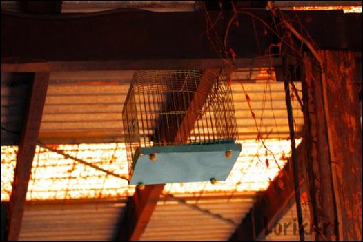 9birdcage_shed3web
