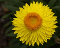 10yellowflowerWEB